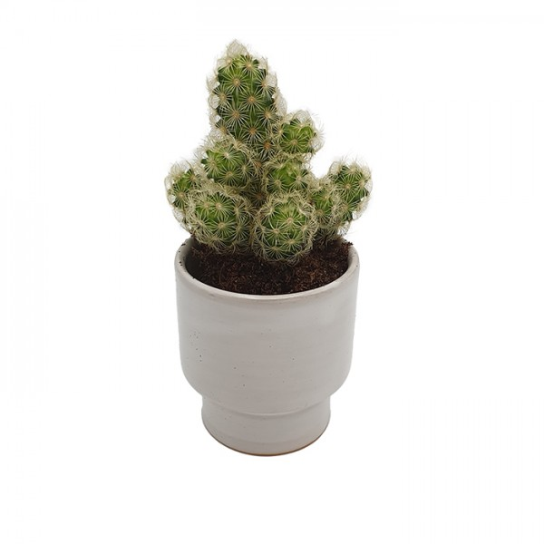 Cup-candleholder-pot Wide white